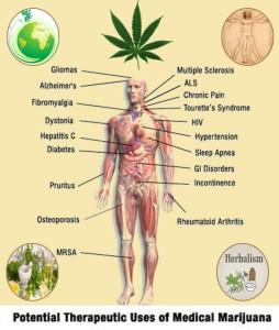 Herbal benefits of medical Marijuana.